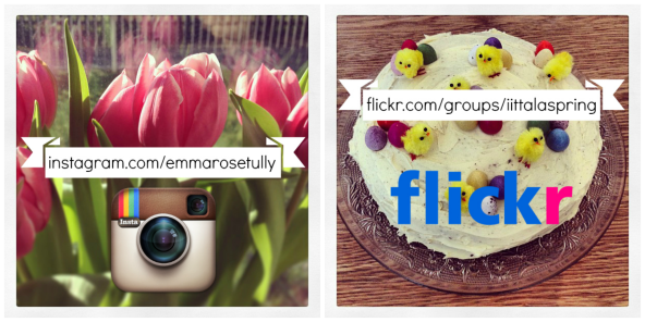 insta flickr follow